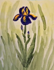 Flower-lynsie.jpg
